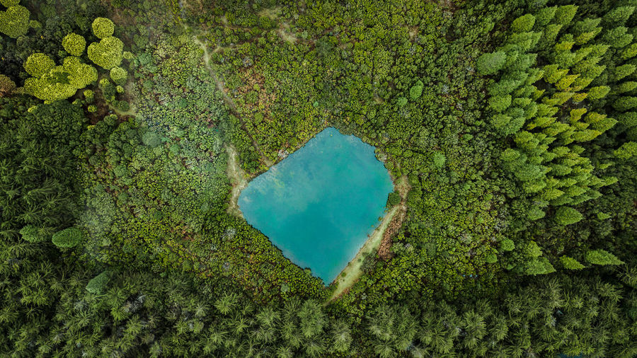 Aerial drone view of natural pond surrounded by pine forest. Drone  DJI Mavic Pro DJI X Eyeem Aerial View Aerial Shot Directly Above Top View Madeira Island Above Autumn No People Rural Scene Geometric Shape Lake Lake View Turquoise Colored Pine Woodland Pine Tree High Angle View Outdoors Beauty In Nature Tropical Climate Environment Nature Pond