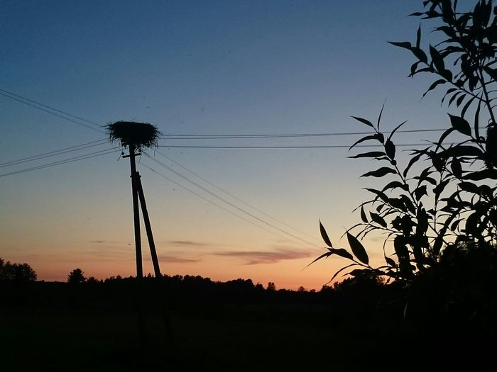 countryside Nature Evening