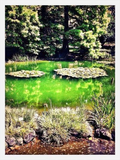 Where Do You Swarm? Urban Escape Botanical garden Zagreb