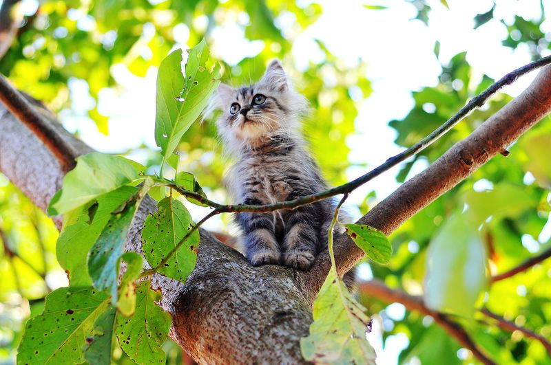 Persian Cat  Cat Lovers Cats Of EyeEm Cats 🐱 Cat Kitten Kitten 🐱 Tree Leaf Perching Branch Climbing Pets Animal Themes Close-up Whisker Yellow Eyes Ginger Cat