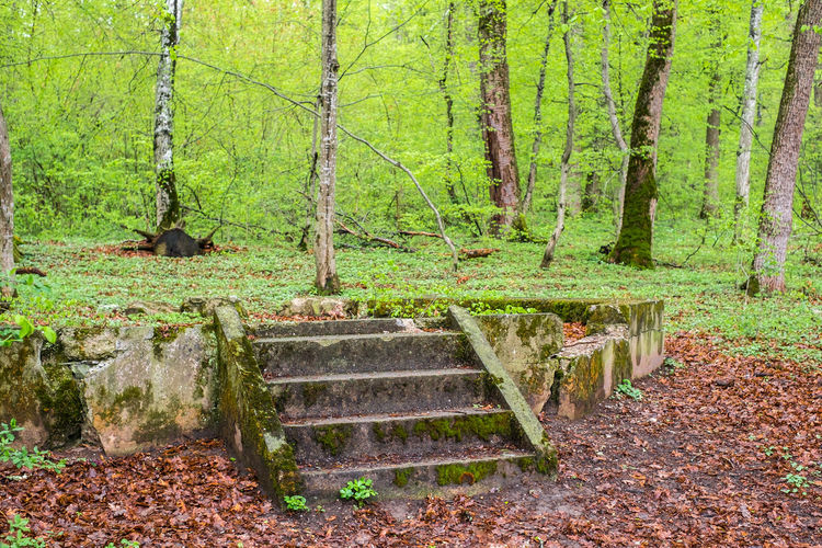 the ruins of a gazebo in the forest The Ruins Of A Gazebo In The Forest Forest Tree Plant Land Nature Tranquility WoodLand Trunk Tree Trunk Staircase Growth No People Day Green Color Beauty In Nature Plant Part Non-urban Scene Leaf Tranquil Scene Architecture Outdoors