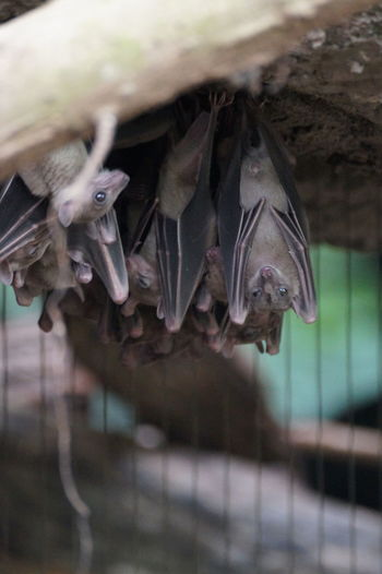 Bat Bats Close-up Day Detail Focus On Foreground Fragility Nature No People Selective Focus Twig