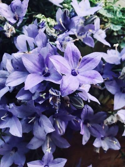 Flower Flowering Plant Plant Beauty In Nature Vulnerability  Fragility Petal