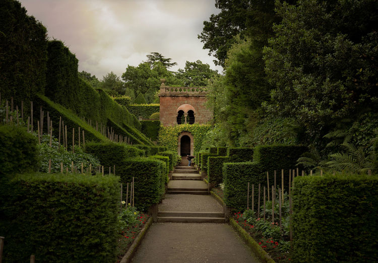 Walkway amidst plants and trees against sky