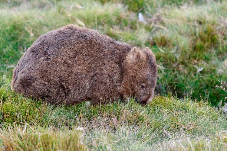 Close-up of bear on grassy field