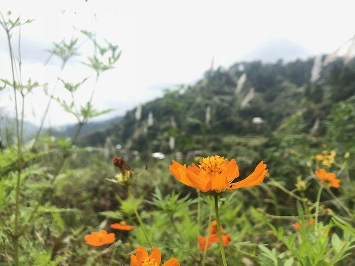 Flower Flowering Plant Plant Beauty In Nature Freshness Fragility Vulnerability