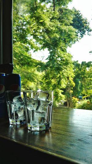 Maadi Pepsi No People Table Tree Green Freshness Drink Ice