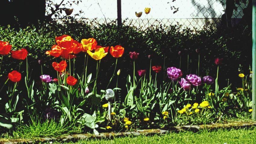 Flowers Enjoying Life