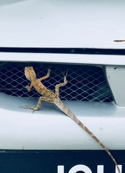 Wired Life Trying Lizzard Exotic Not Invited Animals Littlethings Littlemonsters