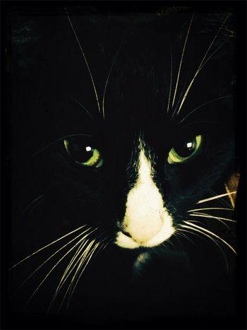 ♡ Cat Eyes