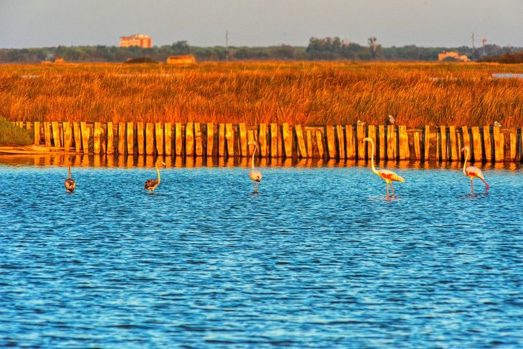 View of birds in the water