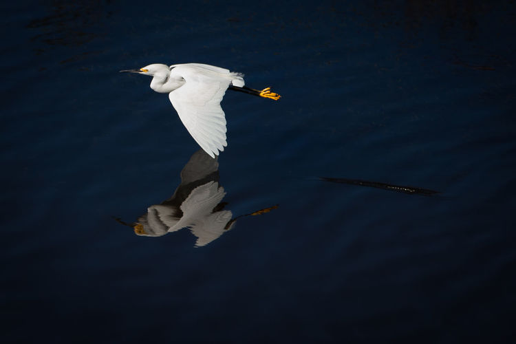 High Angle View Of Egret Flying Over Lake