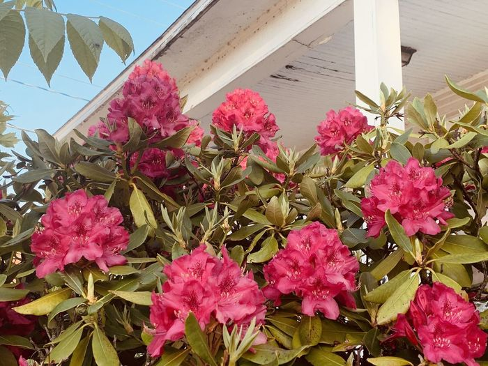Low angle view of pink flowering plants