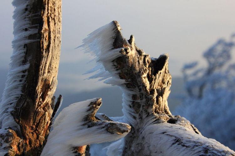 霧氷 高見山からBlizzard