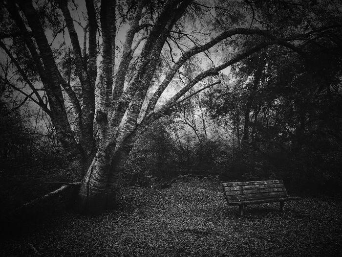 Vestige Resacadelapalma Forest Lonely Tree