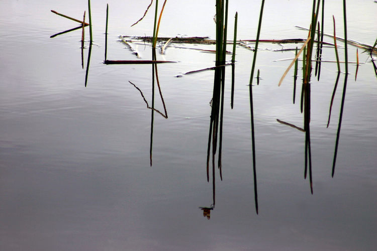 Reflection on the River of Grass, Florida Everglades Alternative Energy Day EyeEm EyeEm Best Shots EyeEm Gallery EyeEm Nature Lover EyeEmBestPics Lake Landscape Nature No People Outdoors Reflection Scenics Sky Standing Water Tranquil Scene Tranquility Water