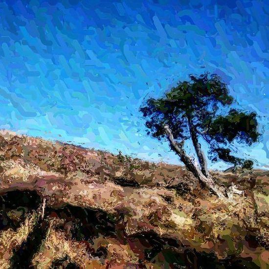 Mencoba tehnik paint moga berkenan Arteurope ArtWork Artindonesia Artpaint Painteditmyself Paint Bestartistever Lukisan Artword Art Artist Artistic Abstract Abstractart Absurd A Panorama Landscape Indonesian Indonesiaart Instaeurope Photooftheday Igers IGDaily Paint bestartfeatures praumountain tree