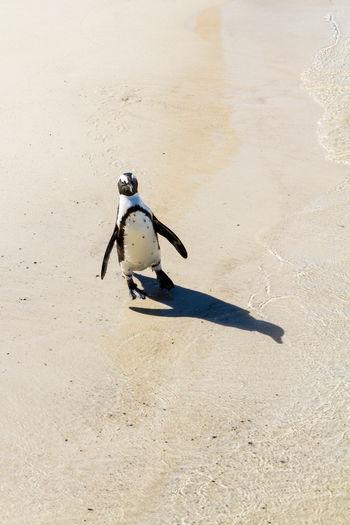 Bird perching on sand at beach