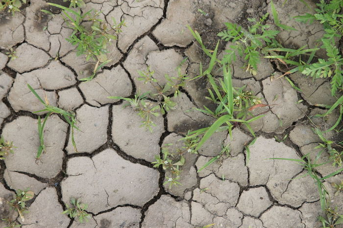Old Puddle Arid Climate Close-up Cracked Drought Environmental Issues Full Frame Land Mud Nature No People Outdoors