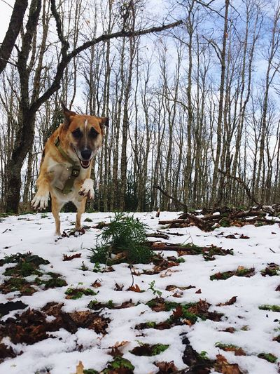 Winter Pets Dog Snow Cold Temperature Nature Outdoors Beauty In Nature Montalbano Elicona Sicily