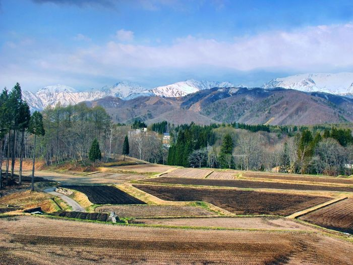 Lovely day~Nagano ken Forest Snowcapped Mountain Landscape Tree Plant Environment Mountain Sky Cloud - Sky Agriculture Tranquil Scene Rural Scene Land Scenics - Nature Field Growth Tranquility Beauty In Nature Nature No People Farm Mountain Range