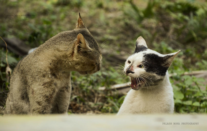 Hey! Who the hell you are !!! Catfight Petphotography