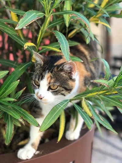 Cat Provence