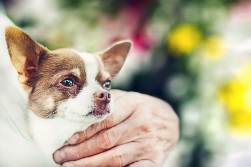 THE YOUNG AND THE OLD| Pets Dog One Animal Animal Puppy Purebred Dog Animal Themes One Person Cute Day Human Body Part Friendship Close-up Portrait Beauty Life EyeEm Gallery Nex6 Lightroom Freshness Summer Closeup Outdoors Headshot Beauty In Nature EyeEm Selects Pet Portraits
