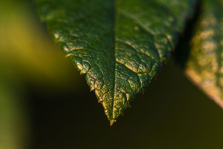 Beauty In Nature Close-up Day Fragility Freshness Growth Leaf Leaf In Morning Light Nature No People Outdoors Plant