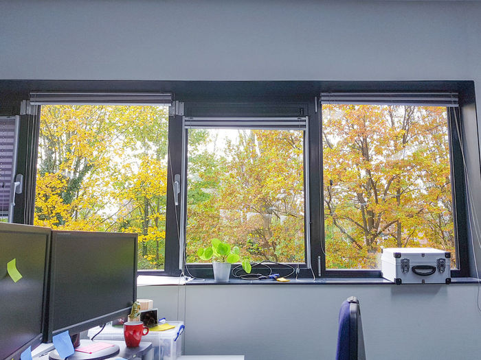 Trees seen through glass window
