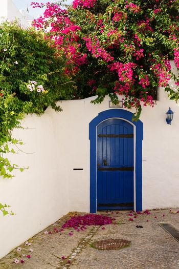 Door Scene in Burgau, Portugal Algarve Architecture Blue Building Exterior Burgau Day Door Flower No People Outdoors Plant