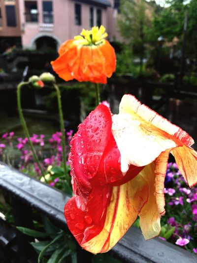 Wilted Flower Flowerporn broken heartef Taking Photos The Traveler Lizaratravelphotography Travel Photography Annecy, France Lizara ❤️ The Great Outdoors - 2016 EyeEm Awards