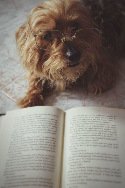 Mon amour EyeEm OpenEdit Eye4photography  Pets Book Reading Playing With The Animals Imagination Funny Canon