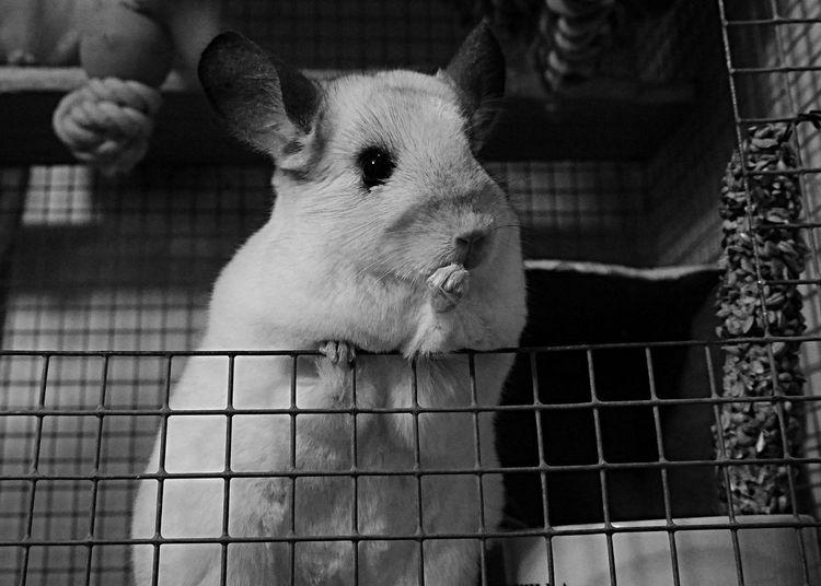 Close-up Pets