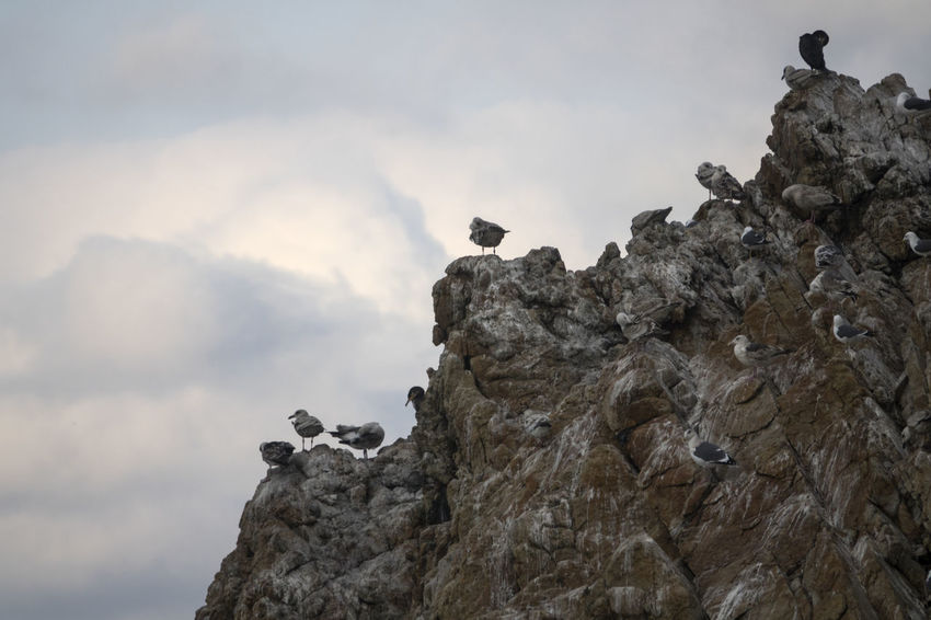 View of Janghohang, Samcheok, Gangwondo, South Korea Animal Animal Themes Animal Wildlife Animals In The Wild Bird Day Janghohang Multi Colored Nature No People Outdoor Pursuit Outdoors Perching Rock Rock - Object Sea Seagull Seaside Sky Tranquility