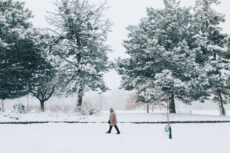 Person on snow covered field against trees. man person walking under snow in park among trees.