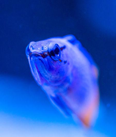 Close-up portrait of fish underwater