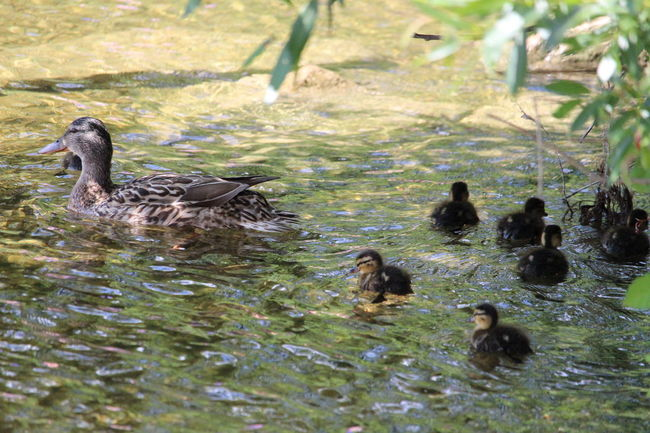 Animal Wildlife Water
