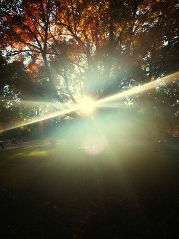 Glitch Relaxing Sunset #sun #clouds #skylovers #sky #nature #beautifulinnature #naturalbeauty #photography #landscape Autumn Leaves Sunshine