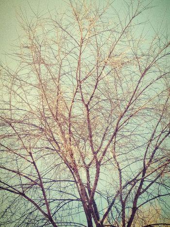 На деревьях ледовые гирлянды Backgrounds Textured  Nature блеск лед весна Весна💐🌷🌿 EyeEm Diversity EyeEm Diversity Art Is Everywhere The Secret Spaces EyeEmNewHere