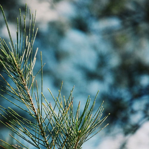 Growth Nature Outdoors Day Sunshine Vscocam EyeEm Nature Lover Beauty In Nature