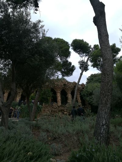 Park Güell, Barcelona Park Guell Barcelona, Spain Gaudì Architecture Work Skate Photography: Same Tricks, New Perspectives Tree Sky Grass Cultivated Land Plantation Growing Tree Area Agricultural Field Plowed Field