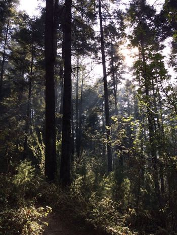 No te des prisa que a donde te diriges es a ti mismo. Tree Forest Nature Beauty In Nature Tranquility WoodLand Outdoors The Week Of Eyeem EyeEm Gallery EyeEm Best Edits EyeEm Best Shots Nofilter Ajusco Mexico
