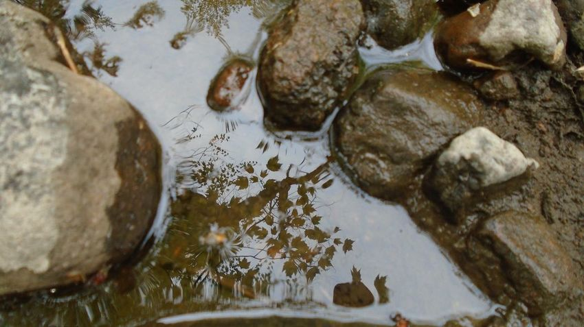 River River Rocks Nature Rocks And Water Reflection Riverwalk Natures Diversities