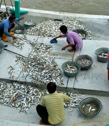 High Angle View Fresh Fish Sorting Out Diffrent Fishes