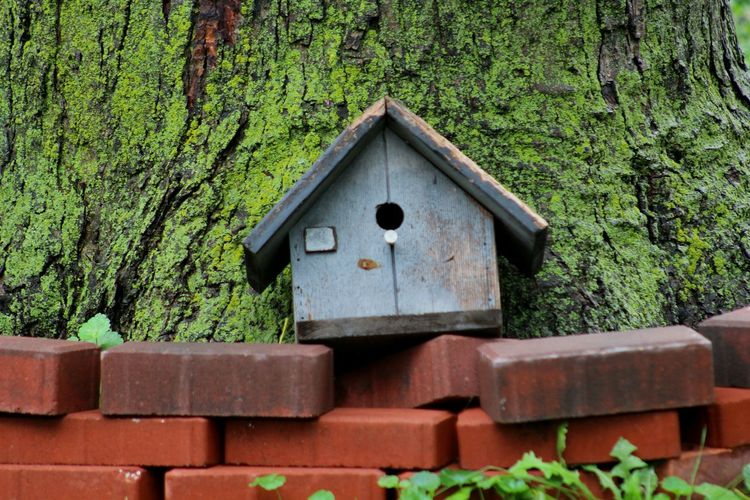 bird house,