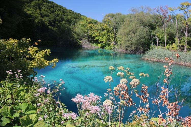 Plitvice lakes detail Tuquoise Water Nature Lake Forest Beauty In Nature Scenics Tranquility Landscape Plitvice Lakes National Park Water Reflections Nature Photography Summertime Sunlight 3XSPUnity Taking Photos Beauty In Nature Nature Lost In The Landscape Perspectives On Nature