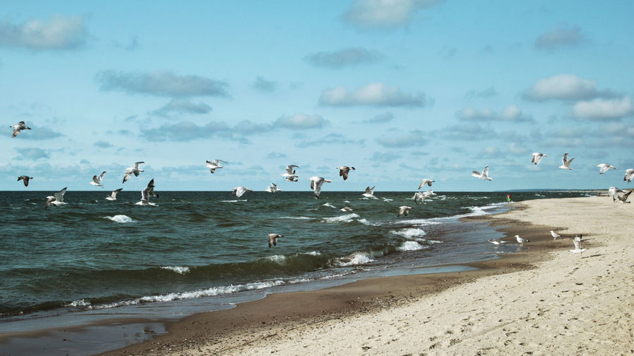 Sea and Birds -