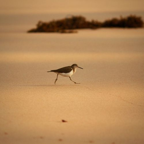 Side view of a bird on beach