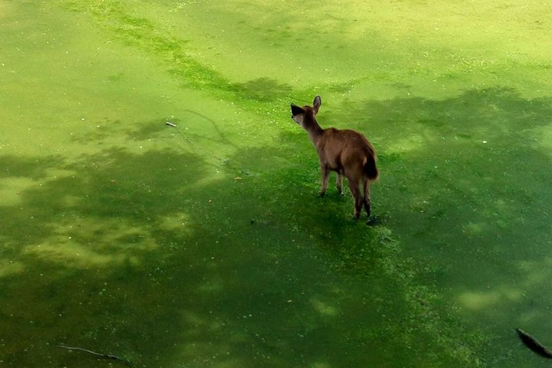 Dear Deer. Deer Walking Greenery Moss Animal Animals In The Wild Animal Themes Green Zoology Wildlife EyeEm Best Shots EyeEm Nature Lover EyeEm Animal Lover Live For The Story The Great Outdoors - 2017 EyeEm Awards